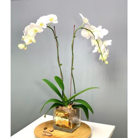 Upscale and Posh Orchid Double Stem