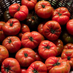 Tomato 'Marmande' Certified Organic Seeds