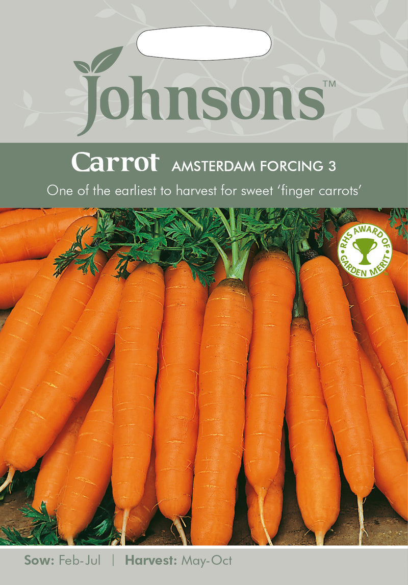 Johnsons 121025 Daucus carota - Carrot Amsterdam forcing 3