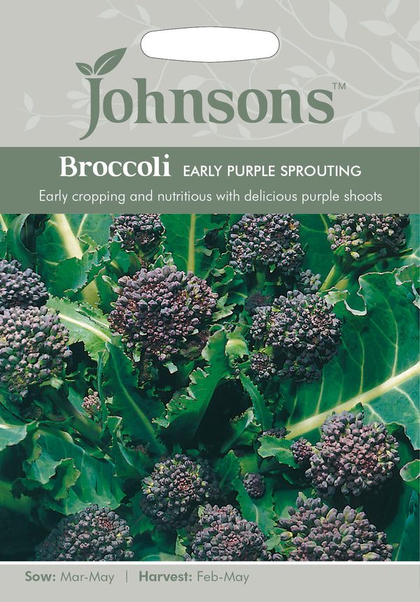 Johnsons 121071 Brassica oleracea Italica- Broccoli Early Purple Sprouting