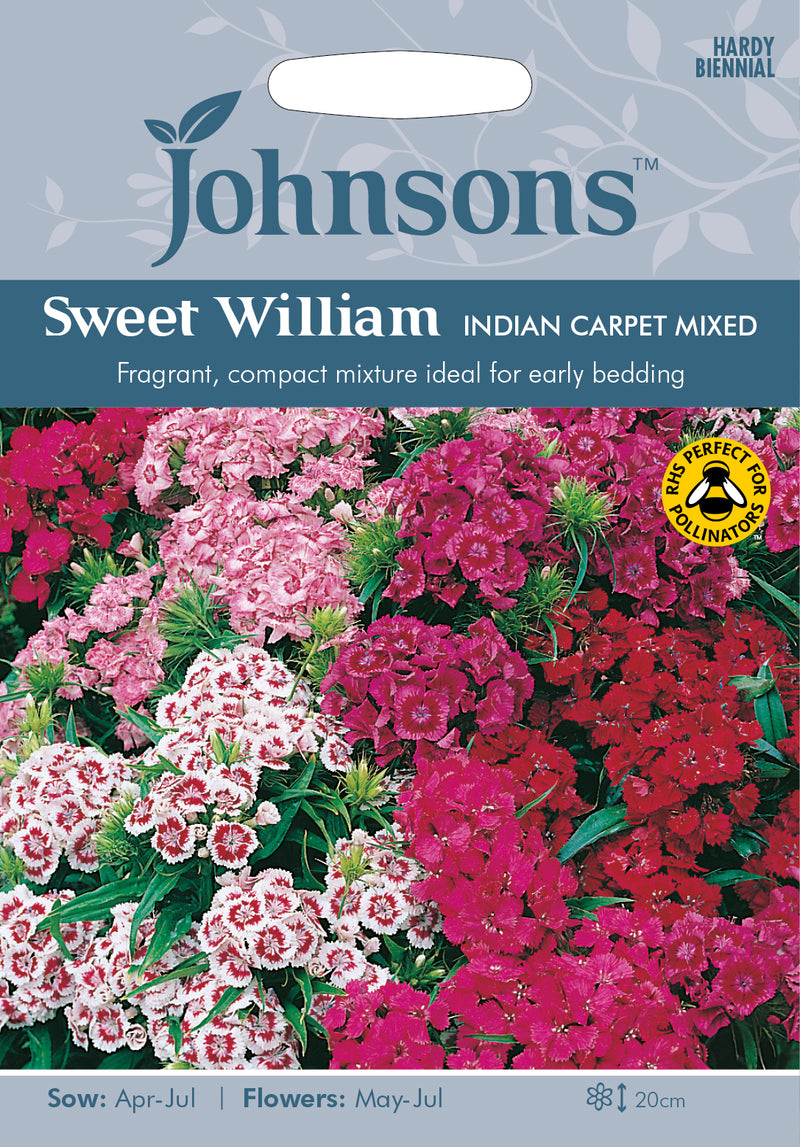 Johnsons 121203 Dianthus barbatus - Sweet William Indian Carpet Mixed