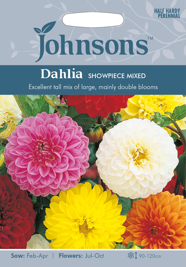 Johnsons 121212 Dahlia x hortensis - Dahlia Showpiece Mixed
