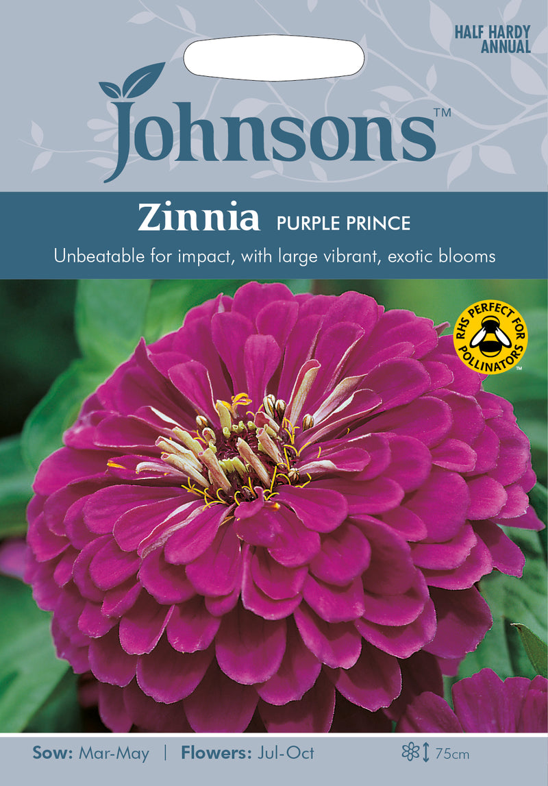 Johnsons 121376 Zinnia elegans - Zinnia Purple Prince