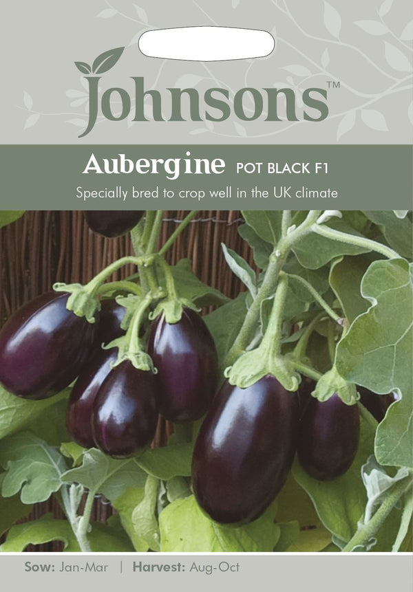 Johnsons Solanum melongena - Aubergine Pot Black F1