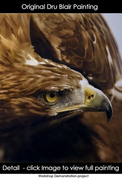Wildlife (study/class demo): Golden Eagle