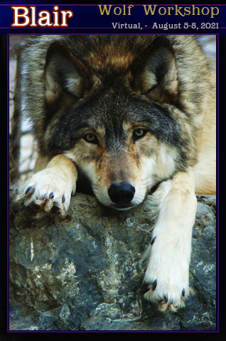 Dru Blair: Airbrush - Wildlife: Wolf </b><p>Oct-7-10, 2021</p>
