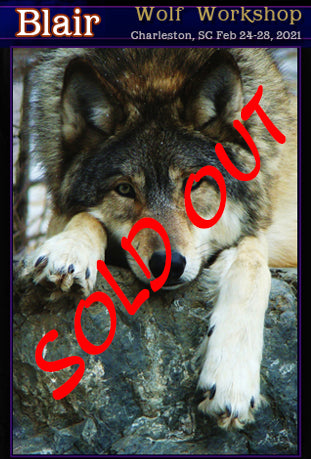 Dru Blair: Airbrush - Wildlife: Wolf SOLD OUT</b><p>Feb-25-28, 2021</p>