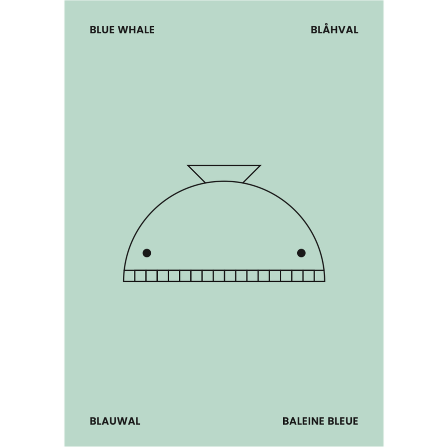 Whale Poster 50 x 70cm