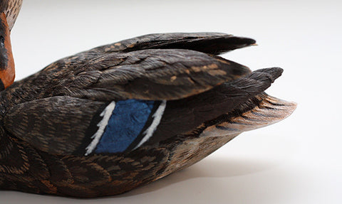 Mallard with Tilted Head