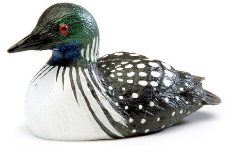 Female Common Loon Duck