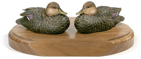 American Black Ducks with Lowered Head on a Base
