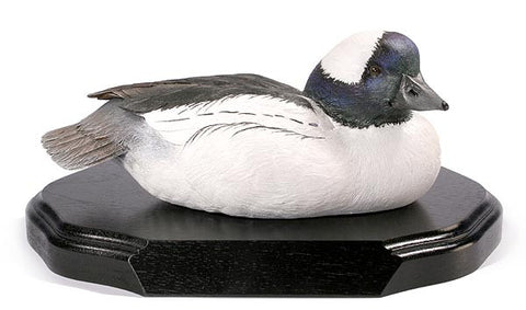 Bufflehead Duck with Lowered Head on a Base