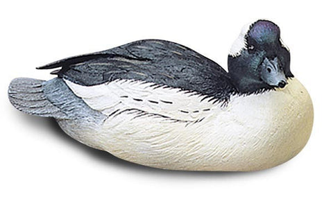 Bufflehead Duck with Tilted Head