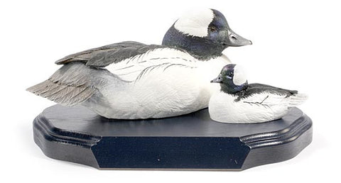 Bufflehead Drakes on a Base