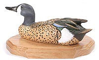 Straight Head Blue-winged Teal on a Base