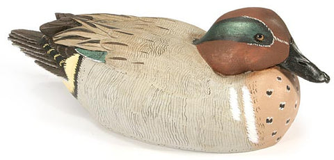 American Wigeon with Lowered Neck