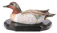 Green-winged Teal Drake on a Base