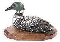Straight Head Common Loon Duck on a Base