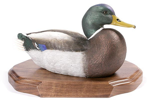 Mallard Drake with Lowered Head on a Base