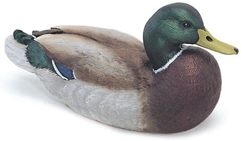 Mallard Drake with Lowered Head