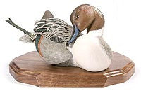 Northern Pintail Drake on a Base