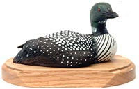 Tilted Head Common Loon Duck on a Base