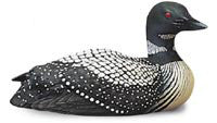 Tilted Head Common Loon Duck