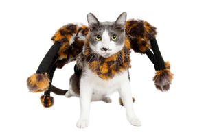 Spider Costume for Cats - JT wagglepurr