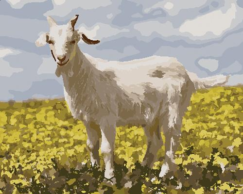 Goat Diy Paint By Numbers Kits ZXB778