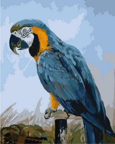 Parrot Diy Paint By Numbers Kits ZXB84