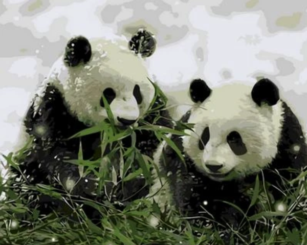 Panda Diy Paint By Numbers Kits ZXQ786