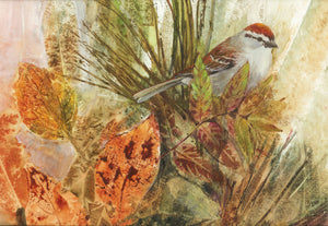 Chipping Sparrow Environment