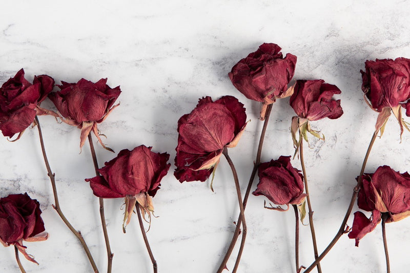 dried flowers red roses