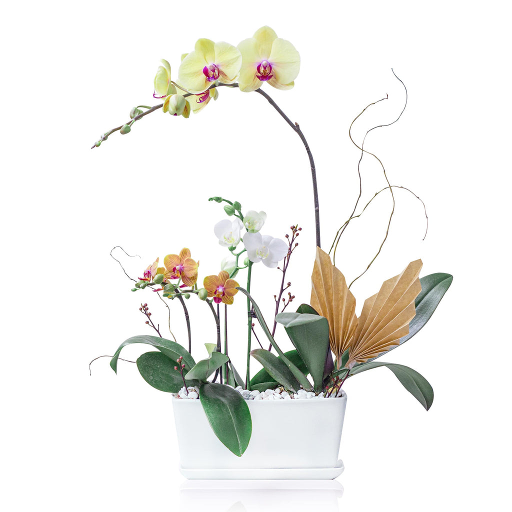 Orchid Arrangement 蘭花擺設