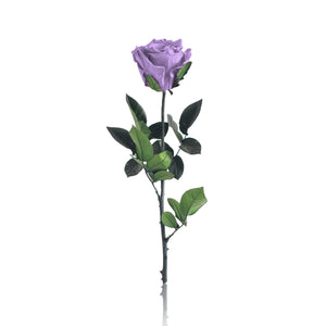 Forever Rose (Purple)