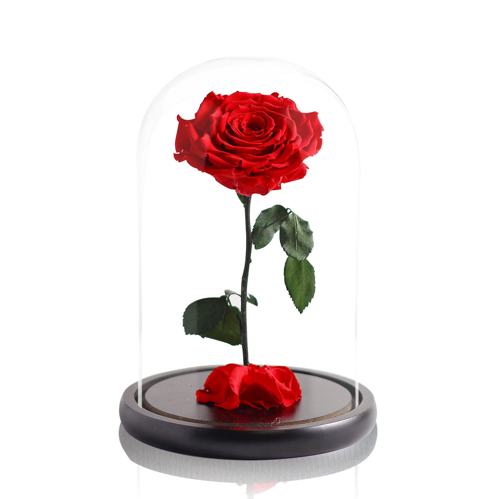 Preserved Rose in Glass Dome 永生花玻璃罩擺設
