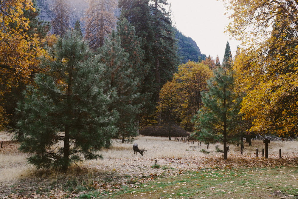 Yosemite • Sanborn Scout Field Log