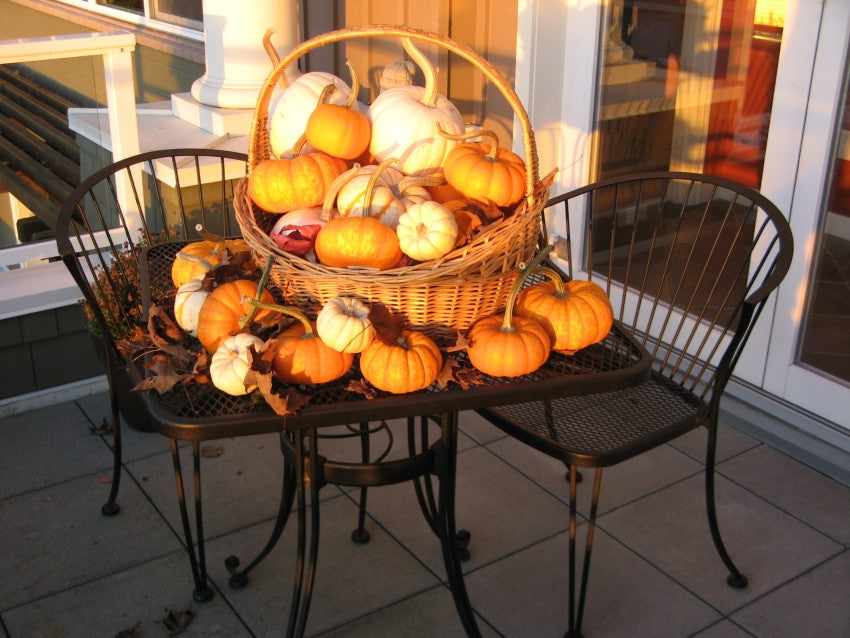 Pumpkins on a Wire Table