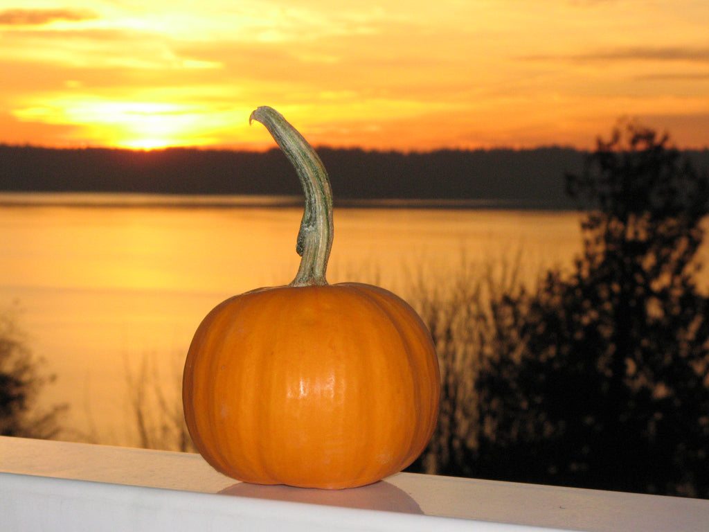 A Pumpkin with a View