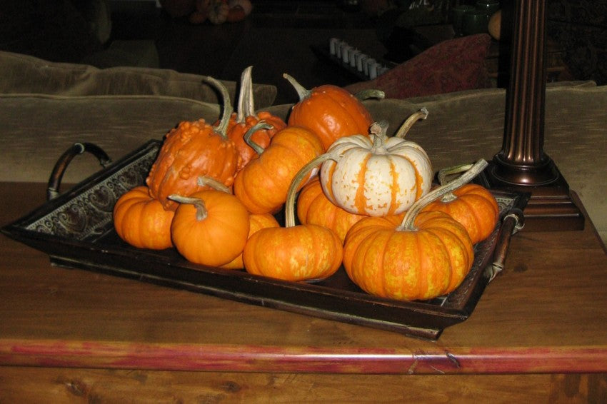 Pumpkins on a Tray