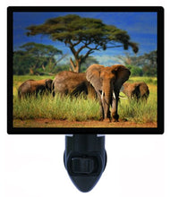 Elephant Night Light, Elephant in The Wild, African