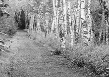 Birch Trees print black and white art, photo paper or canvas picture, 5x7 to 30x45 inches large wall dcor