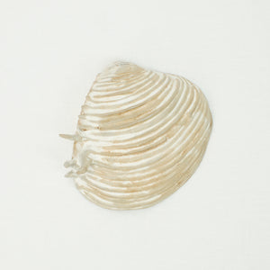 Yarnnakarn Oceanology Clam Shell Dish in sand and white glaze.