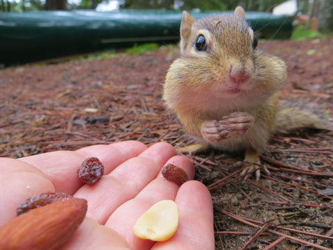 Such cuties! Chipmunks are our spirit animals!