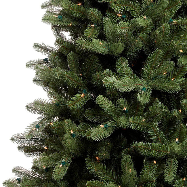 Close-Up of Hudson Spruce Christmas Tree, Showcasing The Spruce Tips and Lights. White Background