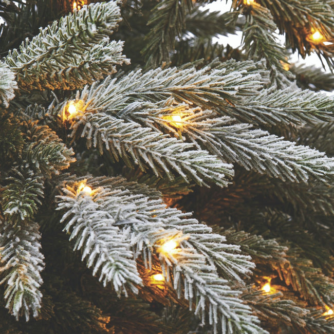 Close-Up of Snow Dusted Pine Tips and Micro-Brite Warm White Lights,of Alpine Christmas Tree