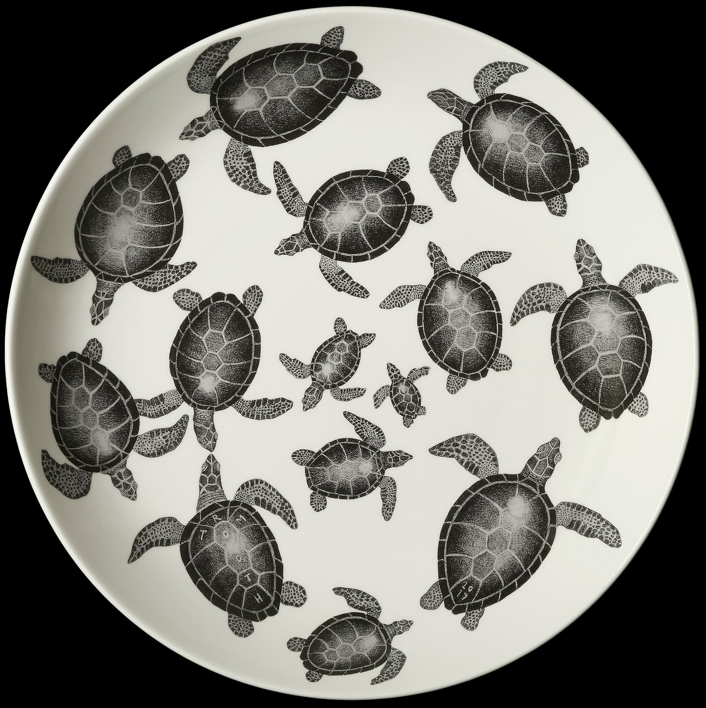 Turtle traffic (limited edition of 188)