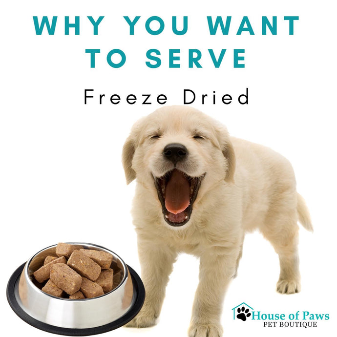 Why You Want to Serve Freeze Dried Raw