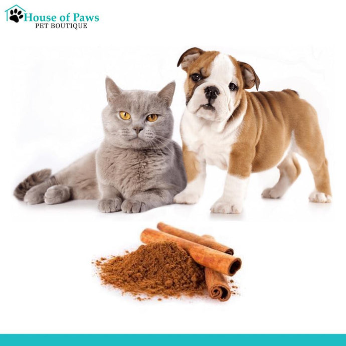 Do you have or know a pet that has diabetes?