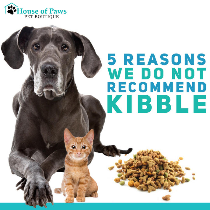 5 Reasons We Do Not Recommend Kibble